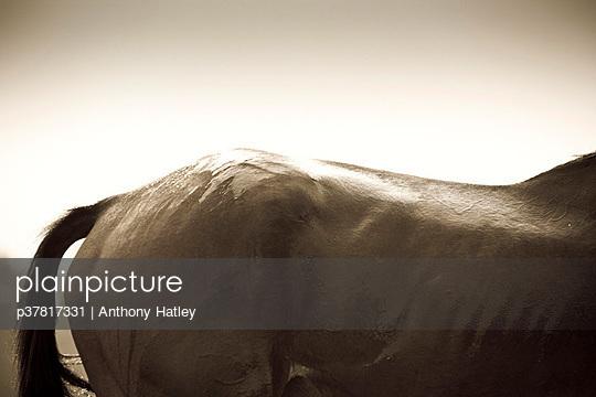 p37817331 von Anthony Hatley