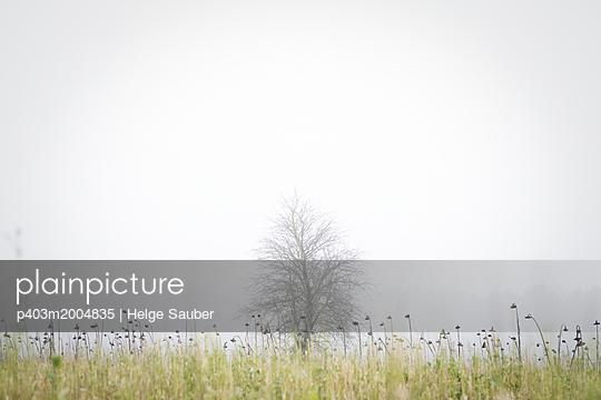 Baum im Nebel - p403m2004835 von Helge Sauber