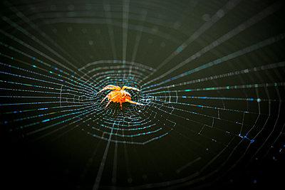 Spinne - p550m1138395 von Thomas Franz