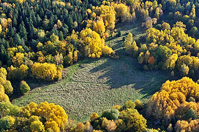 View of forest - p5756824f by Stefan Ortenblad