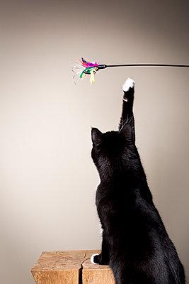 Spielende Katze - p1076m1065236 von TOBSN