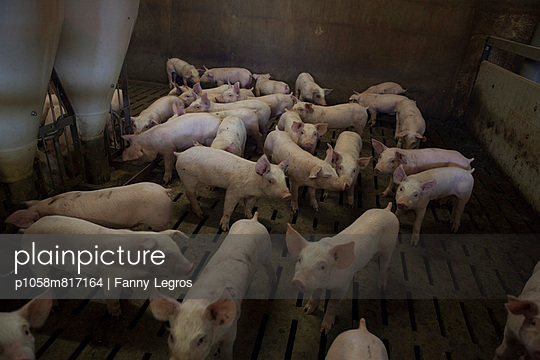 Tierhaltung - p1058m817164 von Fanny Legros
