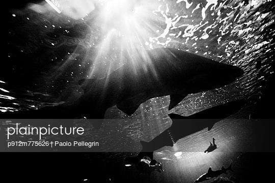 p912m775626 von Paolo Pellegrin