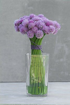 A bouquet of flowering chives (Allium schoenoprasum) in a vase. - p4551397f by Ture Westberg