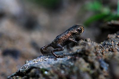 Little Frog - p417m1462217 by Pat Meise