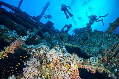 Scuba divers investigating coral covered shipwreck, Red Sea, Marsa Alam, Egypt - p429m1408183 by Rodrigo Friscione