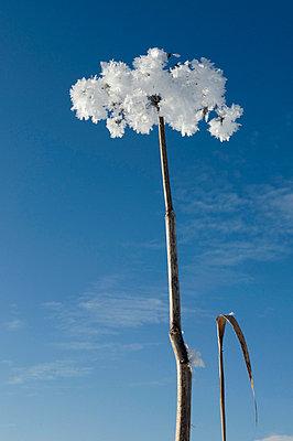 Fluffige Eiskristalle - p4510759 von Anja Weber-Decker