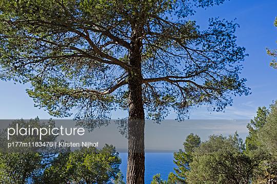 Baum am Meer - p177m1183476 von Kirsten Nijhof