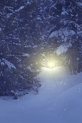 Light Shining on a Path in a Snowy Forest - p1617m2264072 by Barb McKinney