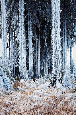 Eiszeit - p1168m959783 von Thomas Günther