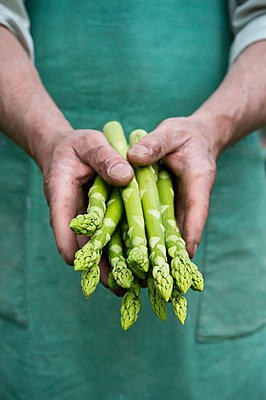 Man holding bundle of organic green asparagus in hands - p300m2023929 von Achim Sass