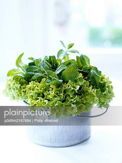 Mint leaves and lettuce in metal pot - p349m2167684 by Polly Wreford