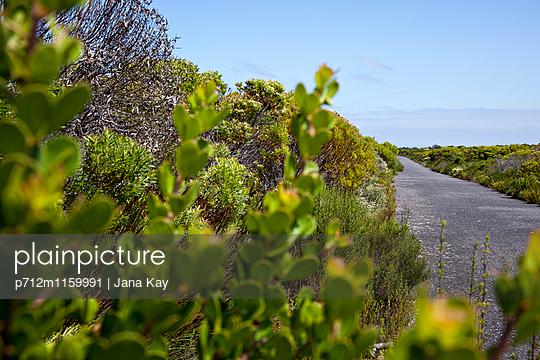 Sukkulenten wachsen am Straßenrand - p712m1159991 von Jana Kay