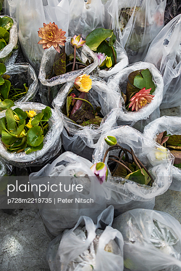 Thailand, Different plants in plastic bags - p728m2219735 by Peter Nitsch