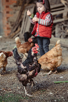 Portrait of black hen in a farm barnyard with little girl in the background - p300m1115001f by David Pereiras