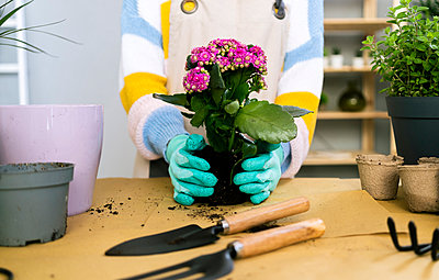 Young woman working in a gardening laboratory or plant shop - p300m2275398 von Giorgio Fochesato