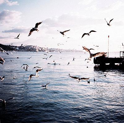 Seagulls - p9370169 by Karolina Doleviczenyi