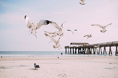 Seagulls flying at beach against sky - p1166m1231528 by Cavan Images