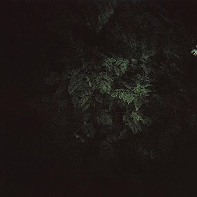 Busch im Dunkeln - p1225m1039333 von Mascha Lohe