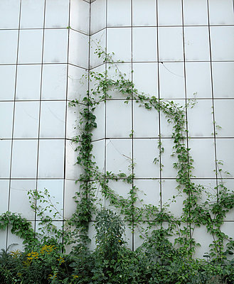 Climbing plants - p275m808085 by Franziska Klose