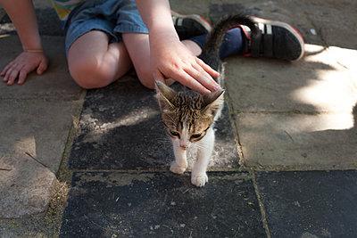 Sweet little kitty - p454m2177770 by Lubitz + Dorner