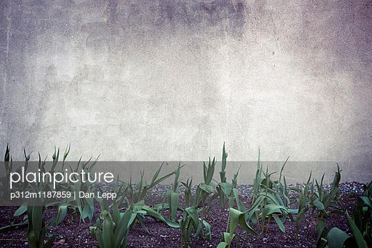 Plants against wall - p312m1187859 by Dan Lepp