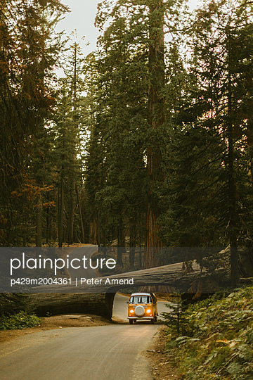 Man driving camper van under fallen sequoia tree, Sequoia National Park, California, USA - p429m2004361 by Peter Amend