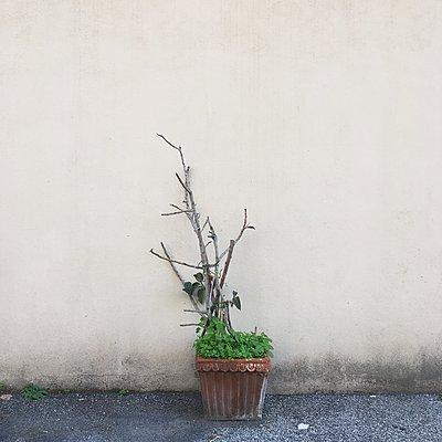 Vertrocknete Pflanze - p1401m2210260 von Jens Goldbeck