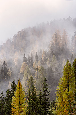 Woodland in the fog - p1652m2257780 by Callum Ollason