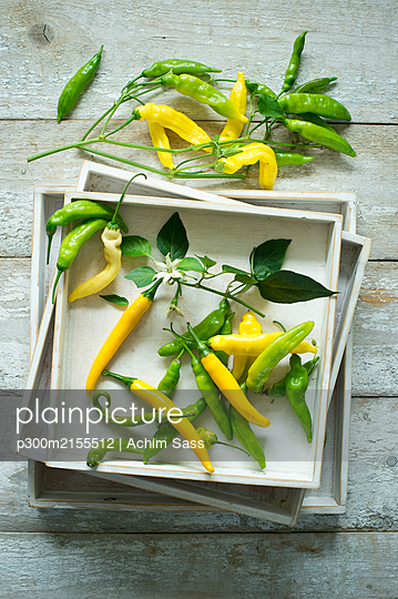 Overhead view of yellow and green chillies (Capsicum) with leaves and flowers on rustic wooden background - p300m2155512 by Achim Sass