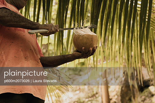 Einheimischer schneidet eine frische Kokosnuss auf - p600m2073026 von Laura Stevens