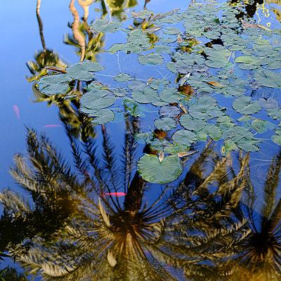 Gartenteich - p1105m2043585 von Virginie Plauchut