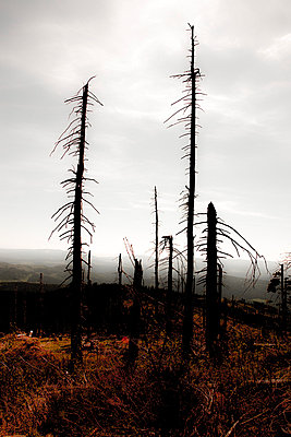 Dead trees - p2481130 by BY