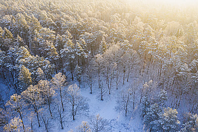 Drone view of snow-covered forest at sunrise - p300m2264770 by Anke Scheibe