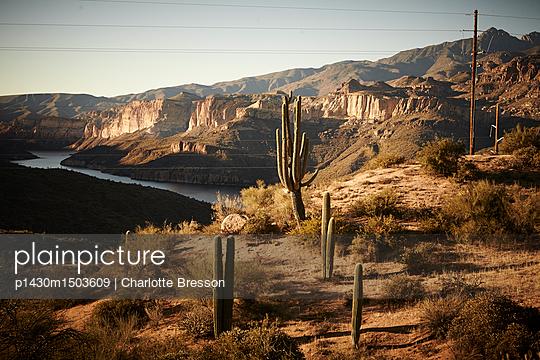 Cactus - p1430m1503609 by Charlotte Bresson