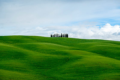 Rolling hills with wheat fields and cypress trees, Val d'Orcia, Tuscany, Italy - p1166m2148620 by Cavan Images