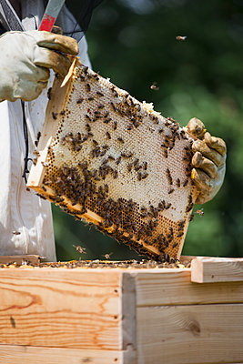 Midsection of beekeeper holding honeycomb at farm - p301m1070135f by Halfdark