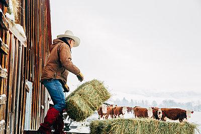 Caucasian farmer hauling hay near snowy barn - p555m1312069 by Inti St Clair