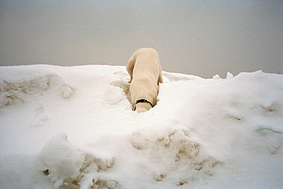 PET - p1205m1020946 by Regina Anzenberger