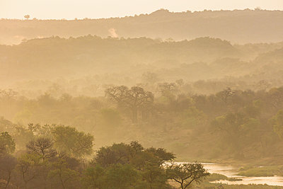 Trees and river in the morning fog, South Africa - p1640m2261124 by Holly & John
