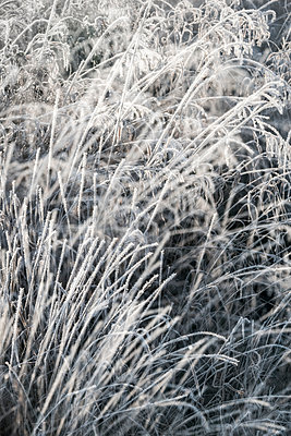 Grass with hoar frost - p739m1191058 by Baertels