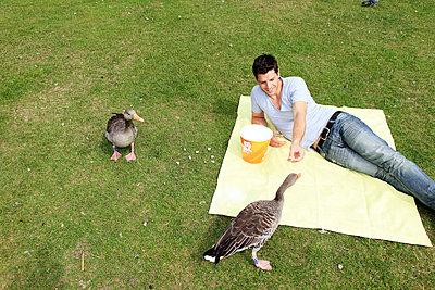 Feeding geese - p0452569 by Jasmin Sander