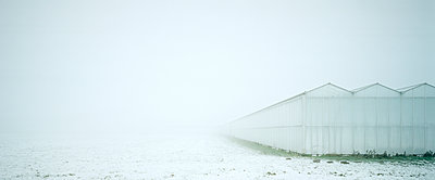 White greenhouse - p1132m925592 by Mischa Keijser