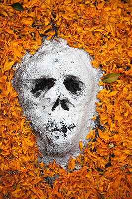 Calavera of Powder Surrounded by Marigold Petals for Day of the Dead - p1248m2210896 by miguel sobreira