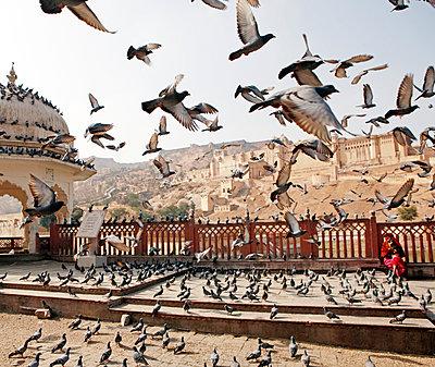 Fliegende Tauben - p1330m1170996 von Caterina Rancho