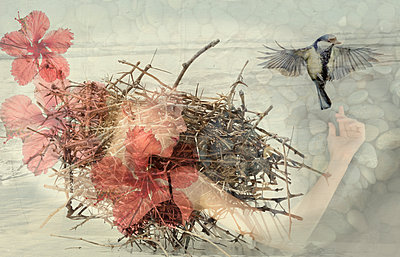 Thorny Nest and Flowers - p1636m2216330 by Raina Anderson