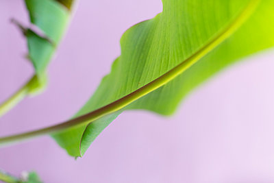Close up vibrant green leaf and stem - p301m2075581 by Ralf Hiemisch