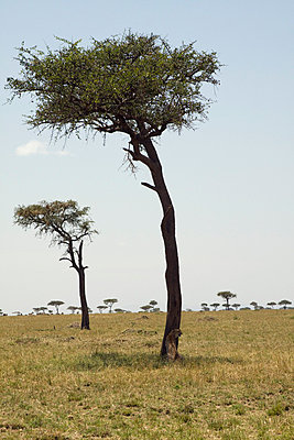 Landscape in Kenia - p7690019 by Nicolai Froehlich