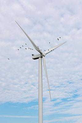Vogelzug vorbei an einem Windrad - p1079m1137127 von Ulrich Mertens