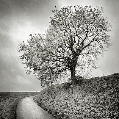 Tree by a road - p1137m932549 by Yann Grancher